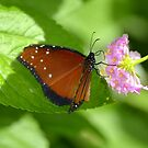 Butterfly 15 by Sunshinesmile83