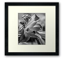 black and white photograph of a lilly Framed Print