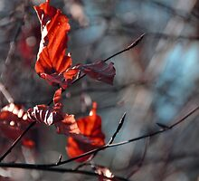 AUTUMN LEAVES by PIMPINELLA