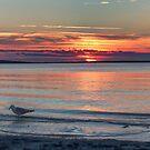 Noyac Bay Sunset Bird by Rick Gold