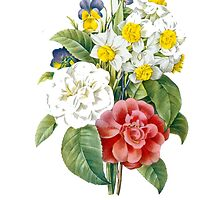 P.J. Redoute vintage colorful flowers botanical illustration.  pink and white camellia, yellow and white daffodils, blue and yellow pansies. by naturematters