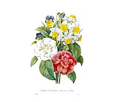 P.J. Redoute vintage colorful flowers botanical illustration.  pink and white camellia, yellow and white daffodils, blue and yellow pansies. Photographic Print