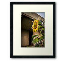 Urban sunflower Framed Print