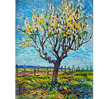 Apricot Tree Photographic Print