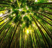 Bamboo Forest by aaronchoi