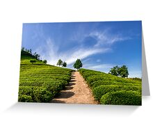 Standing in the green tea field Greeting Card