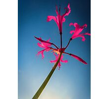 Sky Flower Photographic Print