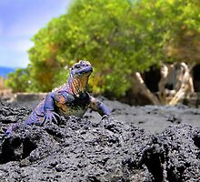 Dozing In The Galapagos Sun by Al Bourassa