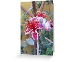 Fig Tree Pink and White Flowers  Greeting Card
