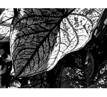 Lines of Life    ^ Photographic Print