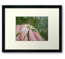Unique Lake Flower Framed Print