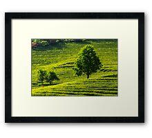 Boseong Green Tea Framed Print