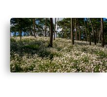 Field of chrysanthemums Canvas Print