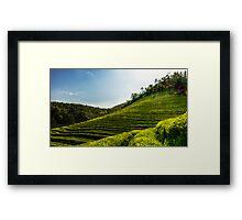 Endless green tea fields Framed Print