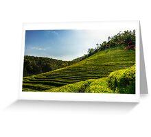 Endless green tea fields Greeting Card