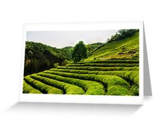 Lone tree among green tea Greeting Card