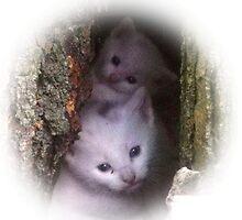 Kittens Hiding In Hollow Tree by rpwalriven