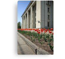 terry red tulips Canvas Print