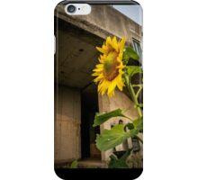 Urban sunflower iPhone Case/Skin
