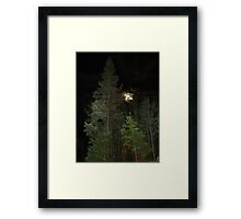 Balsam Fir against the night sky Framed Print