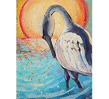 Sea Swan Photographic Print