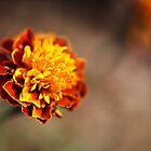 Marigold Golden by Joy Watson