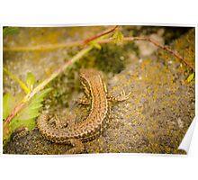 Two Salamanders enjoying a restful break Poster
