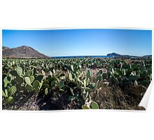 Chumberas (cactus) on the beach of the Genoveses. Poster
