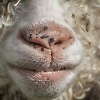 Funny Sheep Face by Pixie Copley LRPS