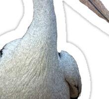 Pelican. Sticker