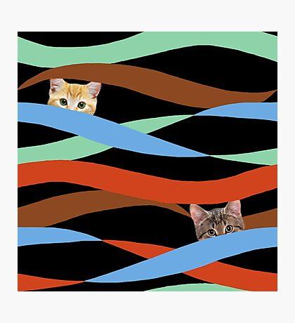 Ribbon Cats Photographic Print