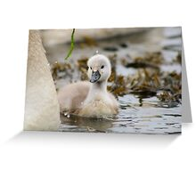Not so ugly duckling Greeting Card