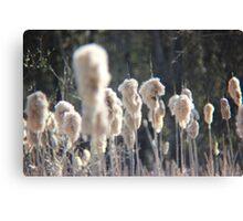 Cattail Fluff II - Turnbull Wildlife Preserve  Canvas Print
