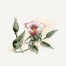 Wild Rose of Summer by Rasendyll