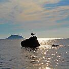 seagull by dedakota