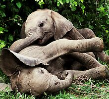 Elephants Play by tipl