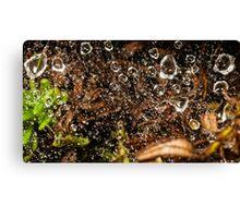 raindrops in spiderweb Canvas Print