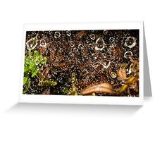 raindrops in spiderweb Greeting Card