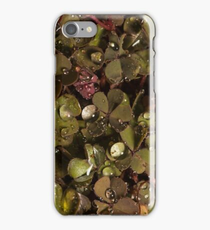 small clover with raindrops and one aphid  iPhone Case/Skin