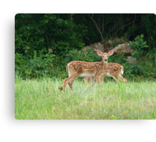 Fawns~ Canvas Print