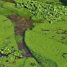 Algae Stream by lezvee
