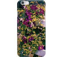 Clematis On A Corner Fence iPhone Case/Skin