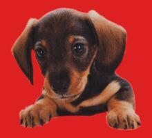 Cute puppy! Sale! One Piece - Long Sleeve
