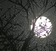 Shoot The Moon by JohnDSmith