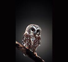 Owl by Sarah21310
