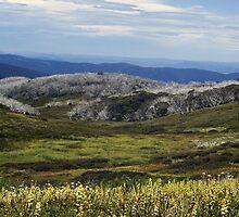 bogong high plains by col hellmuth