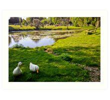 Duck couple near a pond, near a cemetery, in New England Art Print
