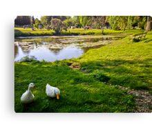 Duck couple near a pond, near a cemetery, in New England Canvas Print