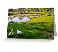 Duck couple near a pond, near a cemetery, in New England Greeting Card