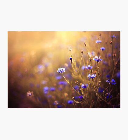 summer light Photographic Print